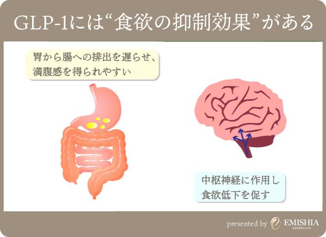 GLP-1によるダイエット効果