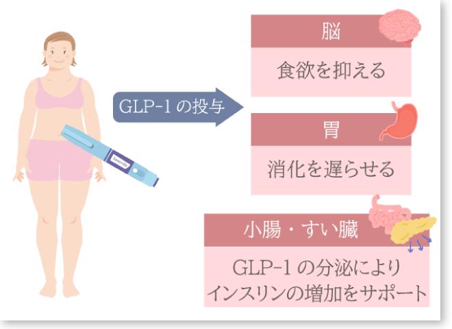 GLP-1の作用 枠付き